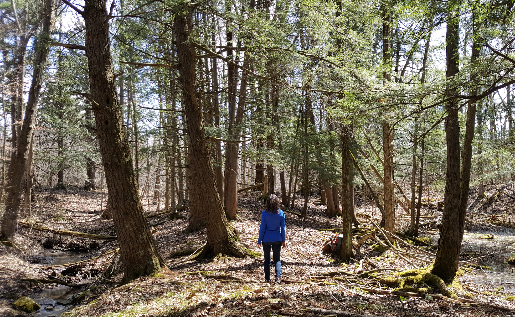 Take A Walk In The Woods Forest Therapy Walks